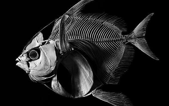 fish_1c_f14-6857_02.jpg