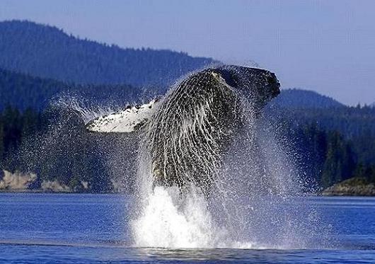 whale6_1.jpg