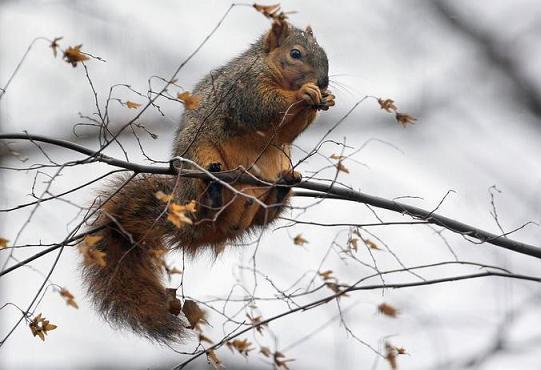 squirrel_28112008_2